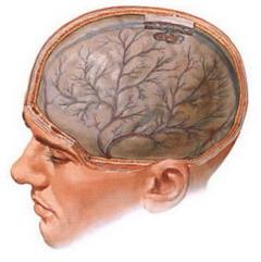 Фото - Енцефалопатія - ураження тканин головного мозку