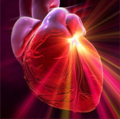 Фото - Легеневе серце рисунок