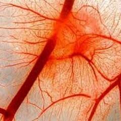 Фото - Ураження судин - основна причина порушення кровообігу