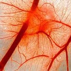 Фото - Порушення кровообігу - одна з причин судинної недостатності