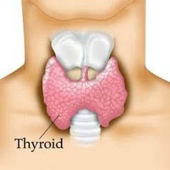 Фото - Група захворювань щитовидної залози - тиреоїдит